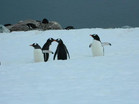 Love Birds-My Antarctica Odyssey:24