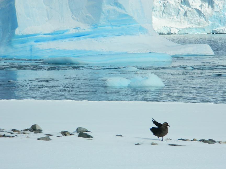 Bird enlivens Antarctica landscape