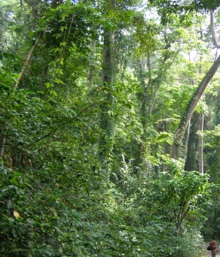 Rain forest Bird Island, Andaman