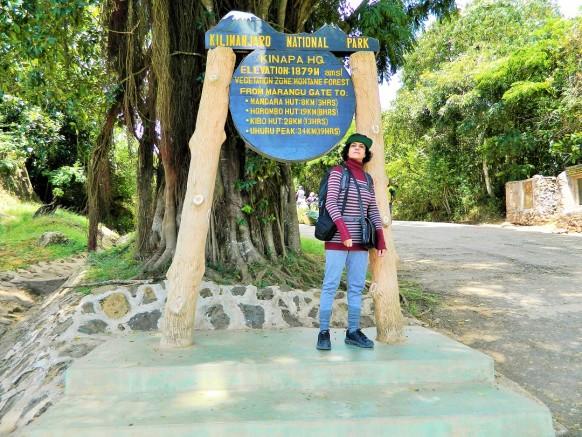 My Kilimanjaro Climb-Trekking Solo:2