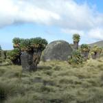 My Kilimanjaro Climb-Exotic Flora & Fauna:10