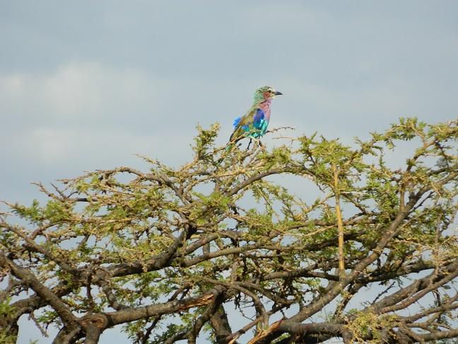 Adorable lilac bird adorning a tree