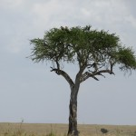 Enormous Masai Mara-Savannah Landscape