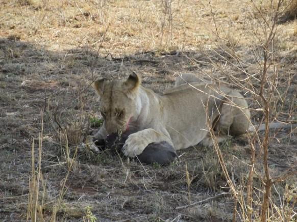 Enormous Masai Mara-Striking Contrast
