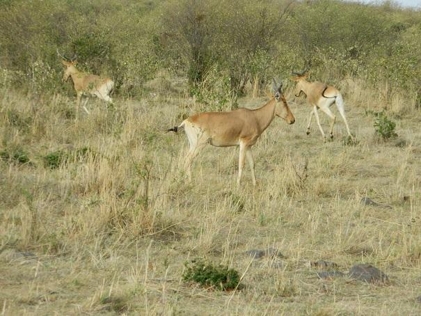 Next moment seen antelopes having fun
