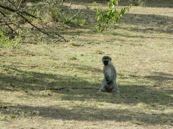 Sweet gestures of monkey making all  smile