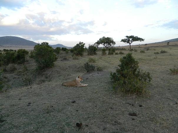 Lioness savoring life